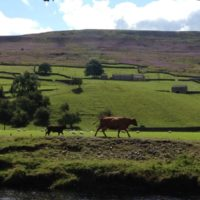 Just a few of our favourite photos of Swaledale