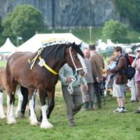 The Best Agricultural Shows in the Yorkshire Dales